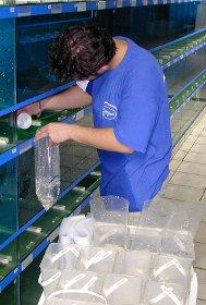 Préparation des commandes de poisson chez Oxyfish à Verlinghem
