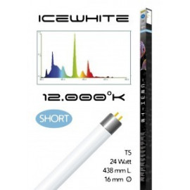 Tube t5 12000° icewhite short 24 watt- 438 mm compatible juwel