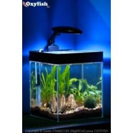 Aquarium colonne betta couleur 20x20x25 4 mm 10 litres