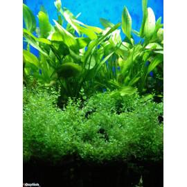 Plantes en pot categorie jaune