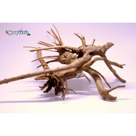 Racine naturelle spider 50-60cm