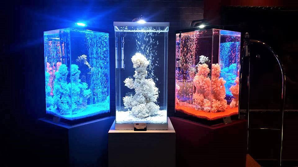 aquarium oxyfish