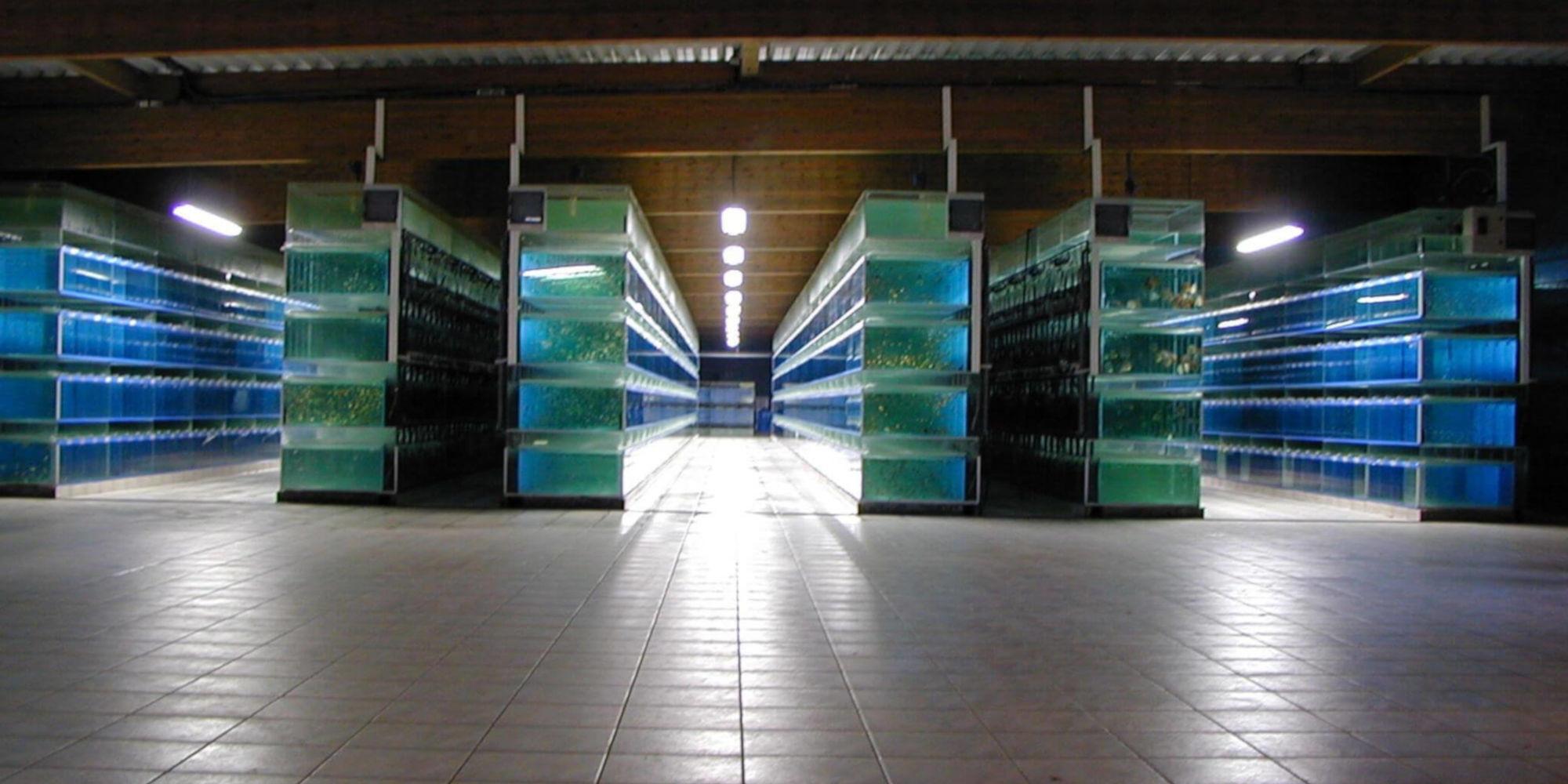 Site e-commerce Oxyfish, nombreuses espèces de poissons pour passionnés d'aquariophilie